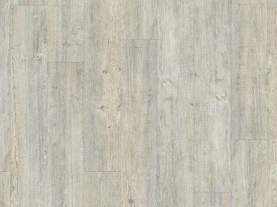 focus-produit-latin-pine-24242